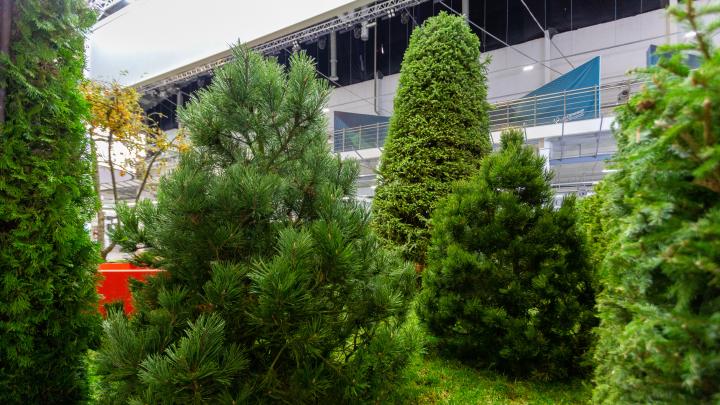 «Такого в городе не видел!»: в Екатеринбурге появится сад, который покорил полмира