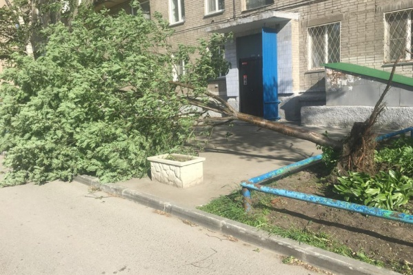 Ветер в Новосибирске сносит деревья