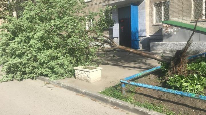 40 тысяч жителей Новосибирской области остались без света из-за сильного ветра