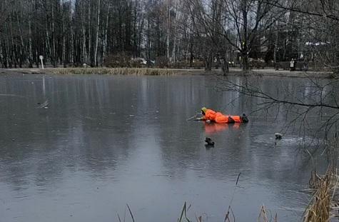 Подвиг не удался: в Ярославле утка обманула спасателей и телевизионщиков