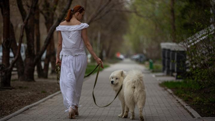 Проверяем уровень загрязнённости города на чистом белом пёсике (результат неожиданный даже для нас)