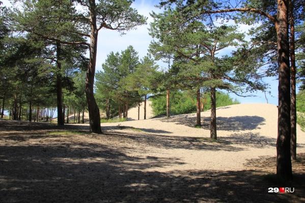 На месяц северодвинцам запретили гулять по Ягринскому бору