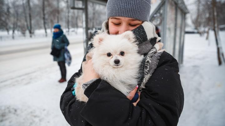 В Кузбассе будет снежная неделя. Синоптики рассказали, чего еще ждать от погоды