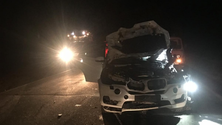 В Самарской области лось погиб под колёсами BMW из Татарстана