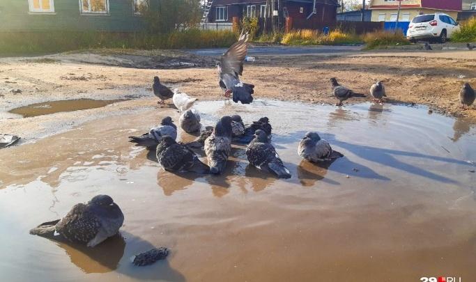 «Такое аномальное тепло не характерно для севера»: в Архангельскую область пришло бабье лето