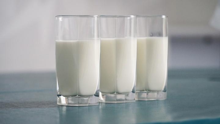 В Пермском крае планируют наладить производство овсяного молока