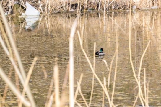 Скоро сезон охоты: кого запретили отстреливать в крае