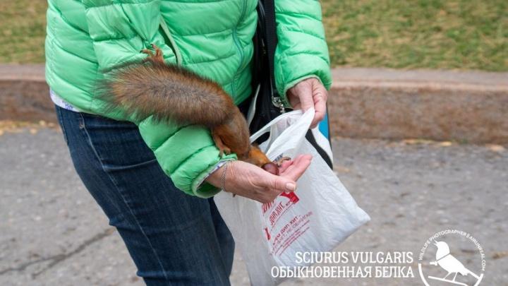 «Самые наглые спокойно бегут за орехами»: бесстрашная белка обчистила пакет волгоградцев