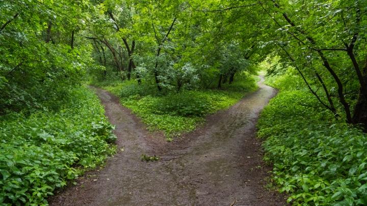 В Перми создадут три новые особо охраняемые природные территории. Где они находятся?