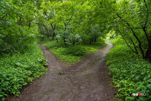 На охраняемых территориях много редких растений