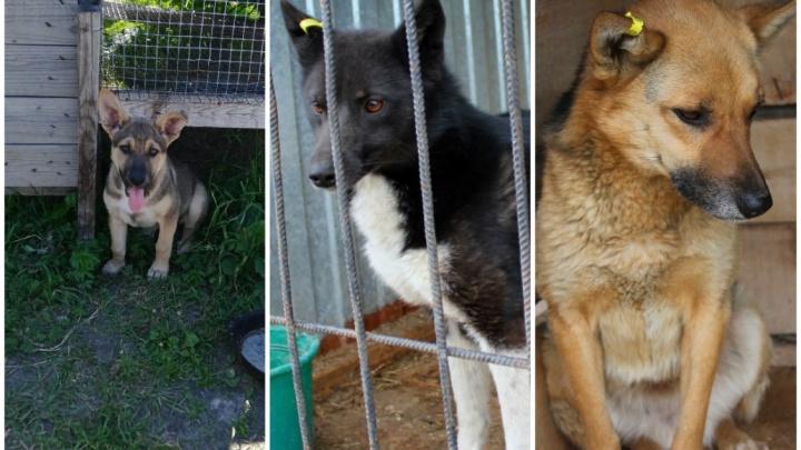 В Тобольске власти выселяют приют для животных: на улице могут остаться 80 кошек и собак