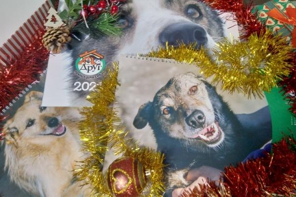 На каждой странице календаря — крупный портрет симпатичной собаки из приюта