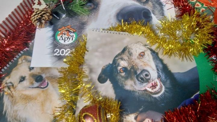 Омский приют напечатал календари на 2021 год с бездомными собаками