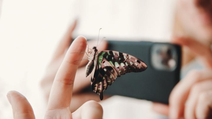Тюменские врачи достали бабочку из уха 10-летней девочки