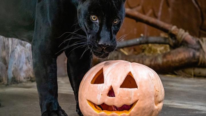 Обитатели «Роева ручья» отметили Хеллоуин и угостились тыквами