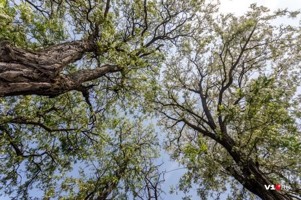 Заходить в лес теперь нельзя, даже чтобы посадить там дерево или взять там валежник