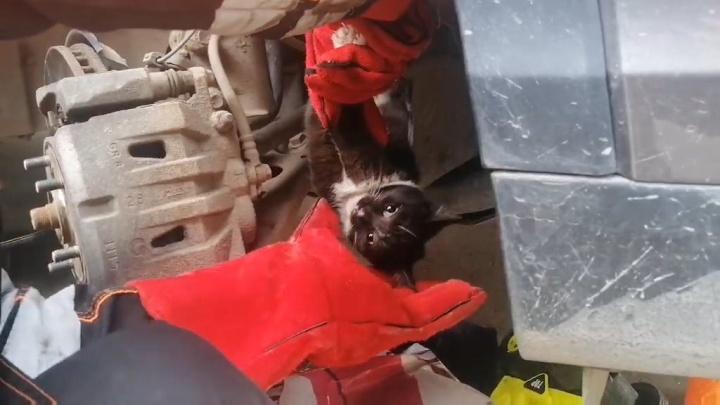 «Переломало под капотом»: в Ярославле спасатели вытащили застрявшего в моторе котенка