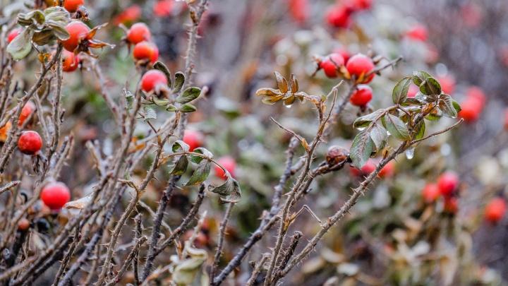 МЧС предупреждает о заморозках в Прикамье