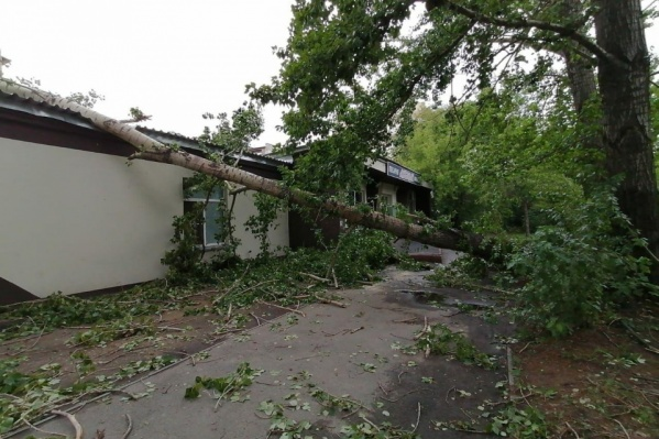 За несколько минут ветер повалил деревья, оборвал провода и оставил сотни домов без света
