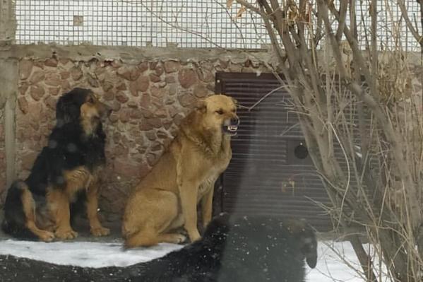 Стаю собак заметили на Металлургов, 30б