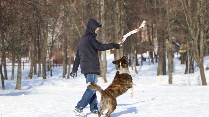 Нижегородцы объявили войну собачникам, выгуливающим своих питомцев на территории школы №24