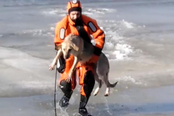 В Кургане спасатели вытащили собаку, провалившуюся под лёд