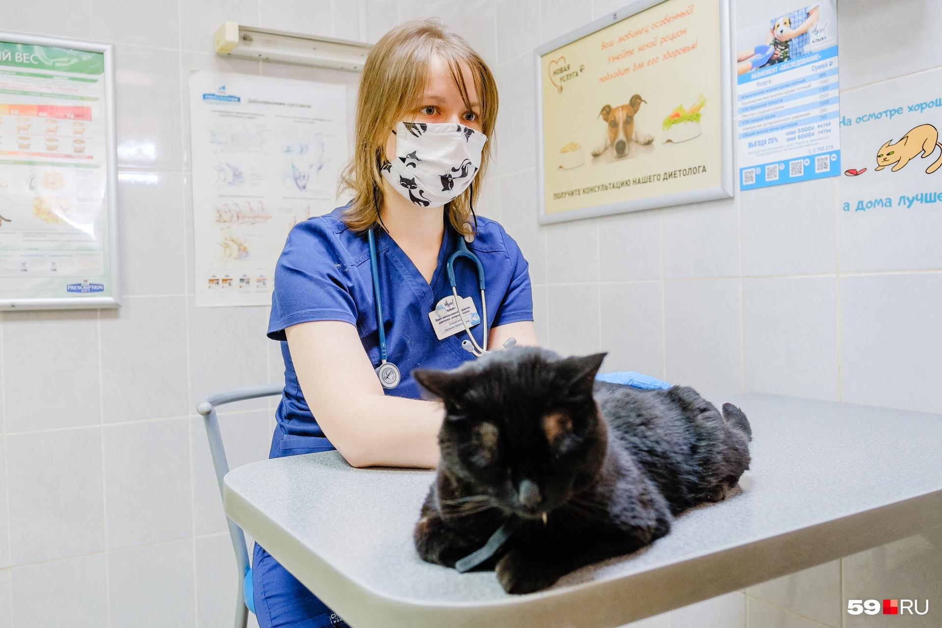 Врач говорит, что кошачий коронавирус лечится до момента мутирования