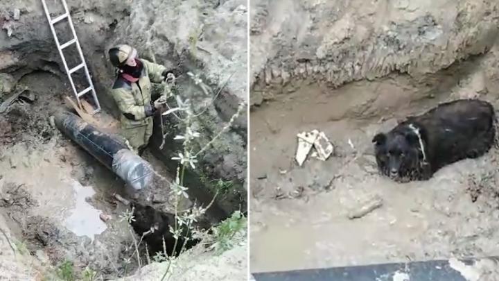 Тюменские пожарные вытащили пса, застрявшего в грязи на дне строительной ямы