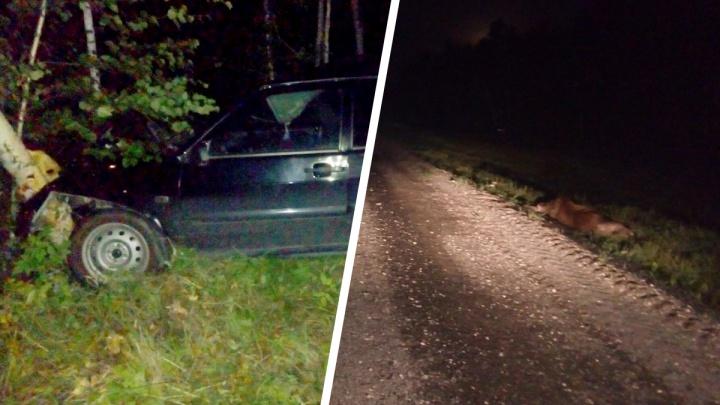 В Уватском районе водитель Lada врезался в лося