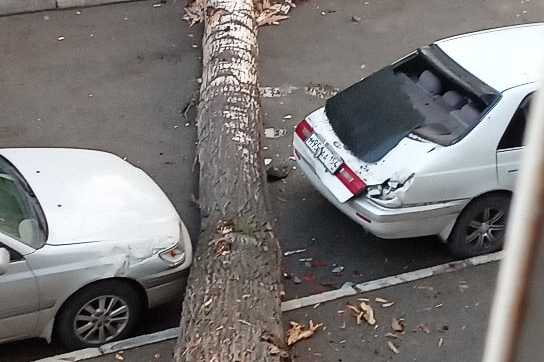 «Раздался страшный грохот»: дерево упало на две «Тойоты» во дворе жилого дома в Ленинском районе
