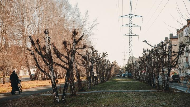 В Тюмени хотят назвать полосу с десятками обрезанных деревьев в честь героев-медиков