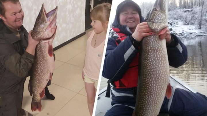 Ростом с ребенка: тюменец поймал огромную рыбу
