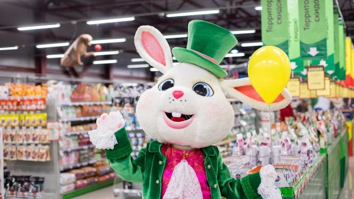В Красноярске появятся сразу 2 супермаркета для животных: в город заходит сеть «Белый Кролик»