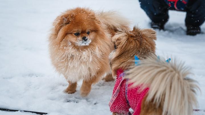 В Кузбассе похолодает до -30 градусов: синоптики рассказали, какой будет неделя