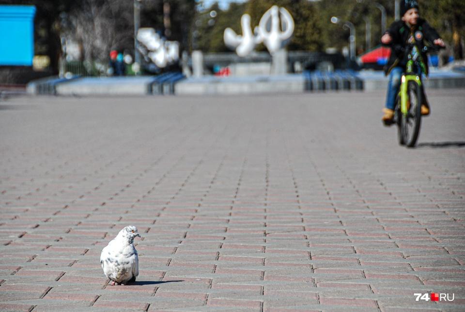 И даже в парке Гагарина можно встретить гуляющих