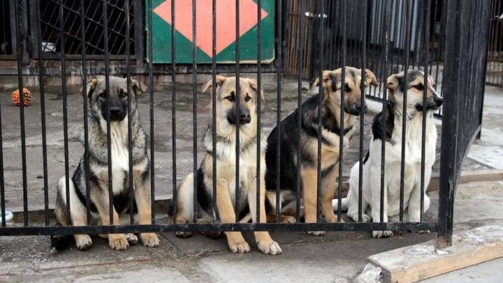 Омский приют срочно ищет работников для ухода за пятью сотнями собак