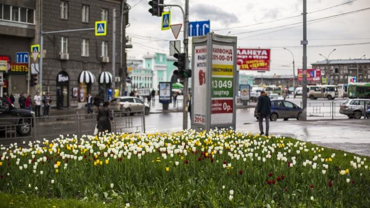 Под Новосибирском появится питомник для растений и деревьев — их будут использовать для озеленения города