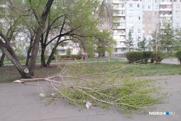 В апреле ураган ломал ветви деревьев
