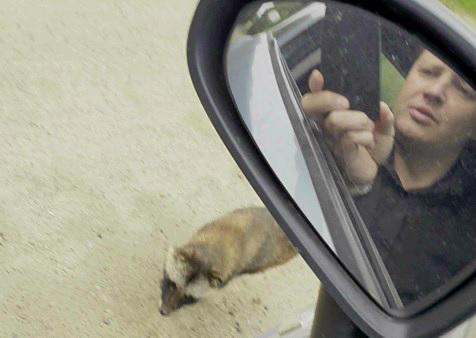 «Вся машина была в крови»: под Ярославлем на автомобилиста набросился дикий зверь. Видео