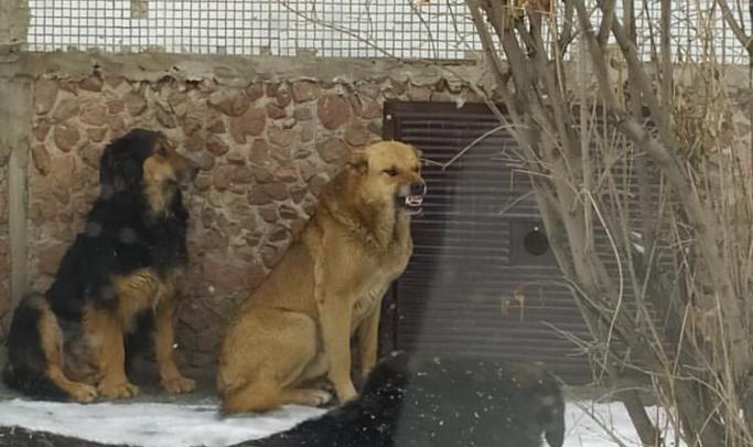 Власти объявили новый аукцион по поиску подрядчика на отлов бездомных собак