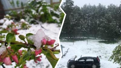 «Урожай в опасности»: в Ярославской области выпал снег. Что будет с погодой дальше