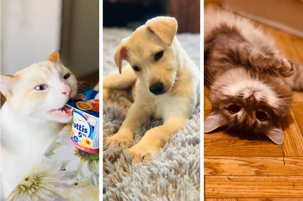 У Марии живут кот Сёма, кошка Белка и щеночек Симба