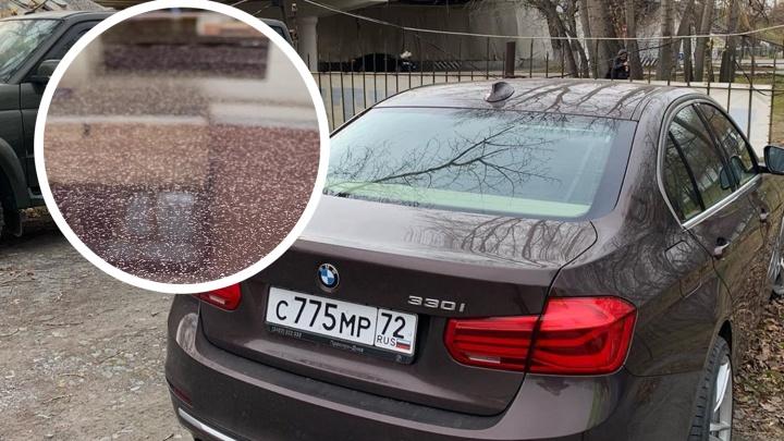 В Тюмени вместе с мостом случайно покрасили припаркованные машины