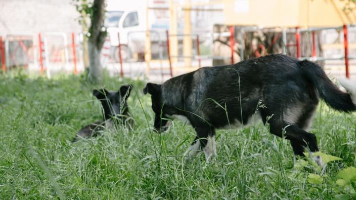 Самарские власти собираются ввести штрафы за жестокий отлов животных