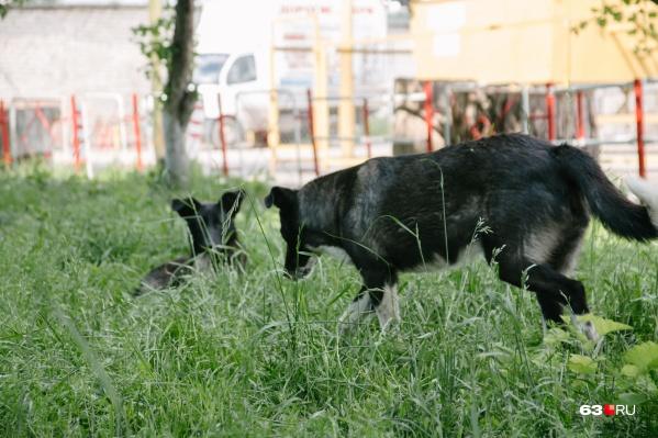 После стерилизации бездомных животных часто возвращают на улицы