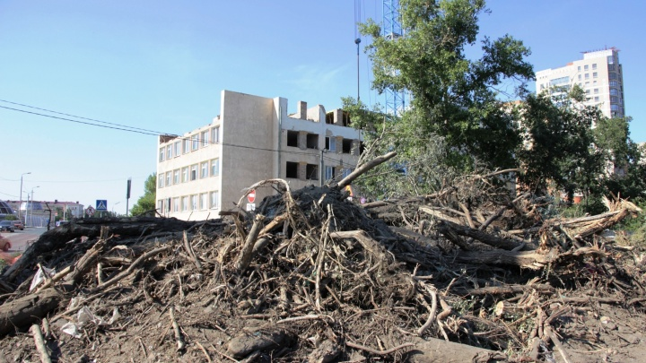 Благоустройство набережной Оми: зачем уничтожили старые деревья и куда делись новые?