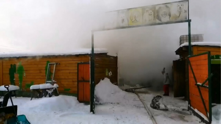 В собачьем питомнике в Октябрьском районе случился пожар — в огне погибли шесть животных