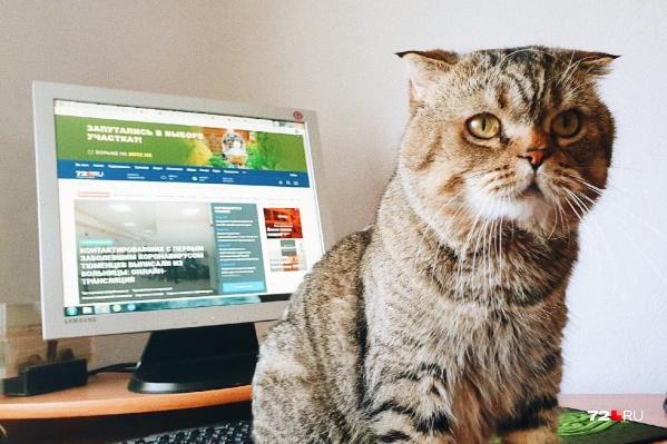 Кот Фрэнки проводит самоизоляцию в гордом одиночестве, пока его хозяева ходят на работу. Читает новости на 72.RU и вам советует
