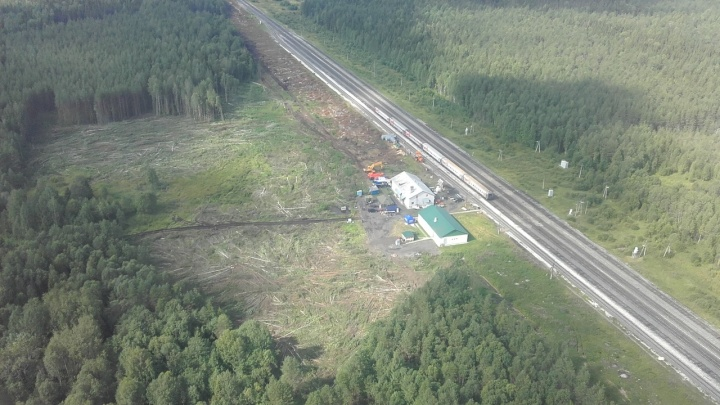 Полиция окончила расследование незаконной вырубки леса на Шиесе