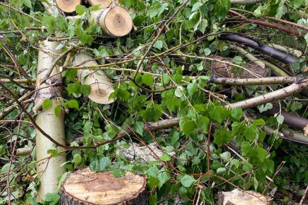 Горожане заметили вырубку деревьев на Университетской Набережной